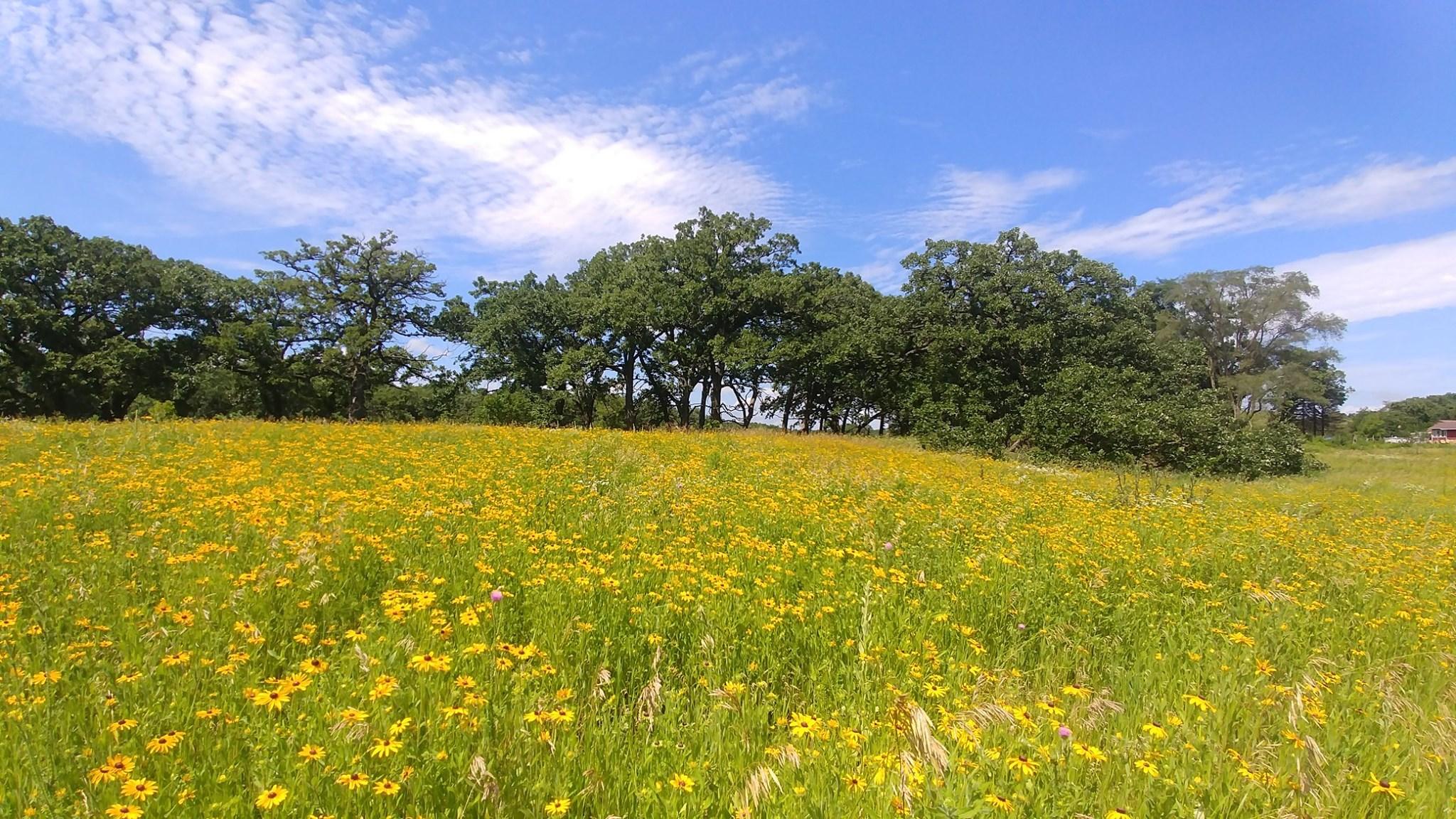 Wolf oak prairie 2